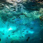 新江ノ島水族館の年パスは人生変わるレベルでお得なので、地元民がその魅力を伝授するよ!